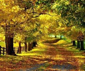 caminho, lindo, and maravilhoso image