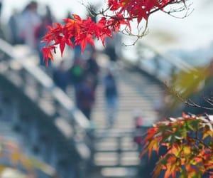 autumn and instagram image