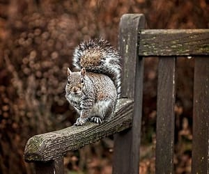 Bench and Squirrel by Gouzelka.