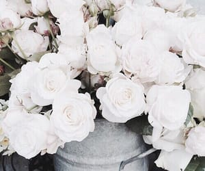 flowers, roses, and white rose image
