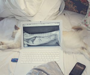 cat, computer, and bed image