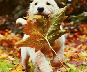 dog, puppy, and autumn image