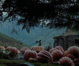 harry potter, pumpkin, and autumn image