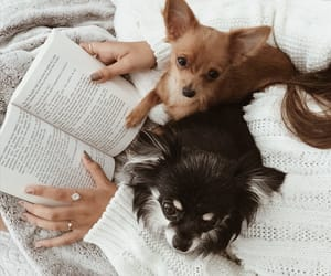 book, chihuahua, and cocooning image