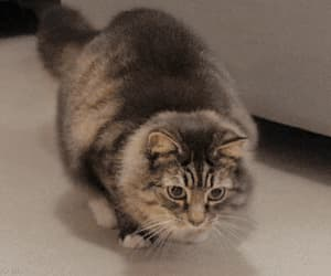 cat, lol, and gif image