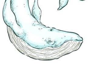 animal, draw, and sea image