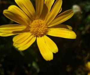 flower, yellow flower, and flowers image
