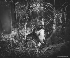 animals, photo, and black and white image