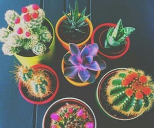 aesthetic, colorful, and cactus image