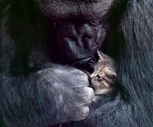 baby, love, and cute animals image
