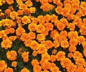 flower, yellow, and beautyful image