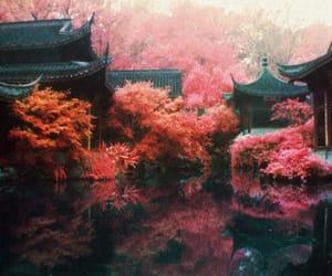 japan, tree, and lake image