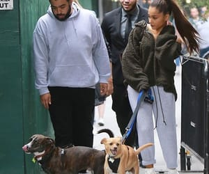dogs, grande, and myron image