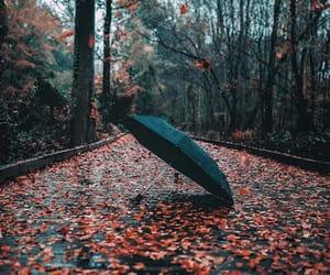 autumn and umbrella image