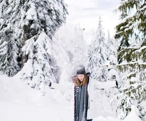 aesthetic, forest, and christmas image