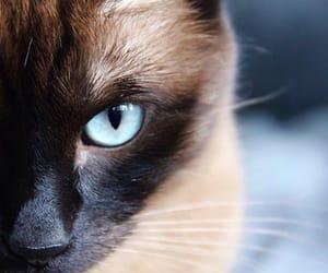 black, blue eyes, and brown image