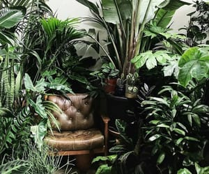 green, nature, and plants image