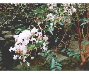 flowers, fukuoka, and japan image