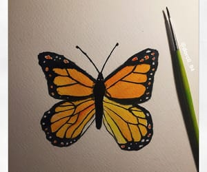 art, butterfly, and colored image