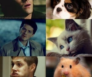 funny, cute, and supernatural image