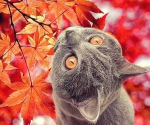 animal, autumn, and cat image