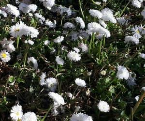 bonito, celular, and flores image