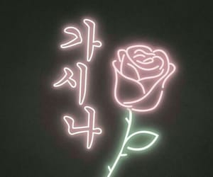 wallpaper, rose, and background image