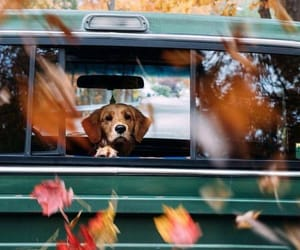 autumn, dog, and animal image