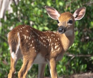 baby, bambi, and fawn image