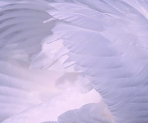 wings, feather, and white image
