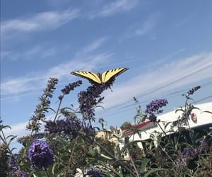 butterfly, santa fe, and summer image