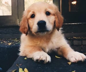 dog, doggie, and cute image