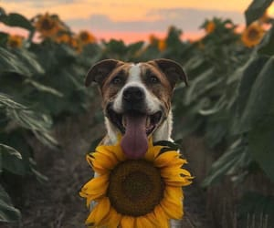 puppy, dog, and flowers image