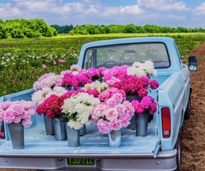 farm, truck, and flowers image