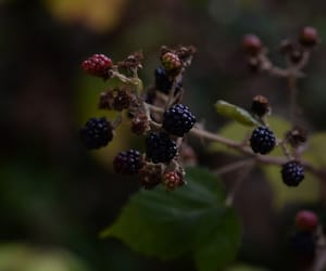 aesthetic, berries, and natural image