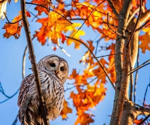 autumn, owl, and tree image