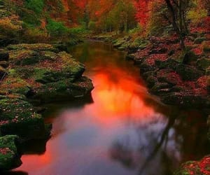 nature, landscape, and autumn image