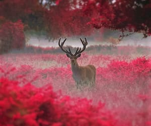 deer, animal, and red image
