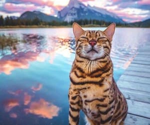 bengal, cat, and travel image