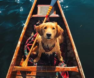 boat, sweet, and golden retriever image