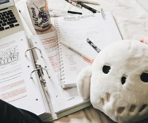 college, hedwig, and motivation image