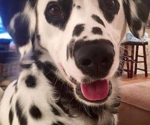 dog, pet, and anima  image