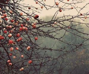 autumn, tree, and apple image