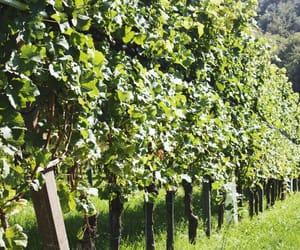 austria, europe, and wine image