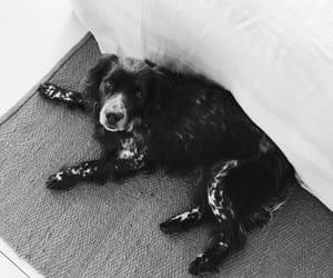 animal, dog, and fluffy image