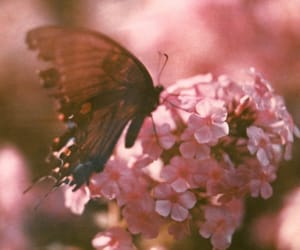 butterfly, flowers, and indie image