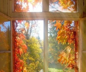 autumn, leaves, and window image