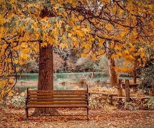 autumn, brown, and cozy image