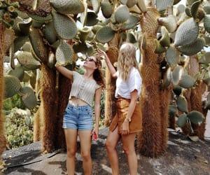 cactus, fuerteventura, and paradise image