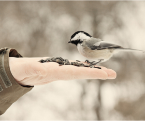 bird, photography, and winter image